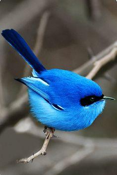 Little Blue Bird - Android Wallpaper
