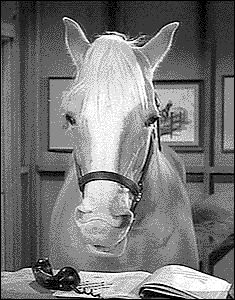 "Mr. Ed (played by Bamboo Harvester) .....""A horse is a horse, of course of course, and no one can talk to a horse of course, that is of course, unless the horse, Is the famous Mister Ed!"" - I have ridden a gorgeous palomino who is a descendant of this awesome horse :-)"