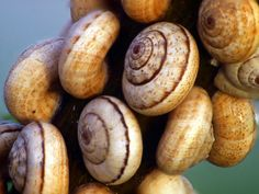 Snail Photo by Yasir Mehmood -- National Geographic Your Shot