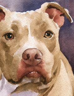 STAFFORDSHIRE TERRIER Art Print Signed by Watercolor Artist DJ Rogers Watercolor Paintings Of Animals, Animal Paintings, Watercolor Paper, Staffy Dog, Bull Painting, Chihuahua Art, Smart Art, Dog Art, Pet Portraits