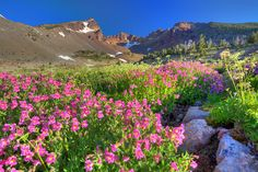Broken top flowers by et078, via Flickr