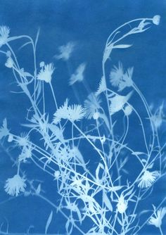 sunprint by Deidre Hawthorne- cyanotype