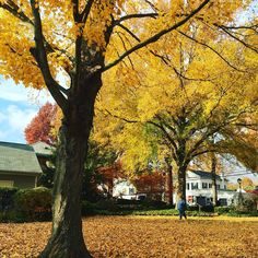 Essex town park in Griswold, Connecticut. #letsmeetct #visitct #connecticut