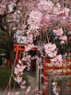 Suika shrine, Kyoto