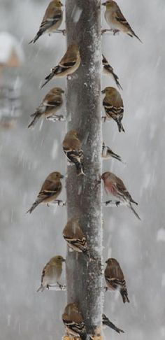 remember to feed the birds so we have a beautiful spring...