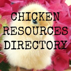 Chicken Resources Directory