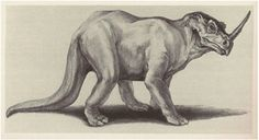 Emela Ntouka- African legend/cryptid: a creature reported to have the body of a rhino with a huge horn on its nose, but also have a thick tail and small frills on its neck. Some think it is a relic of ceratopsian (the same family as the triceratops) however, there is no ceratopsian in Africa's fossil record.