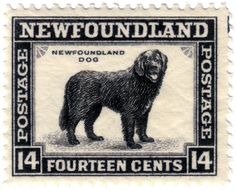 Newfoundland dog, stamp issued by Newfoundland, Canada, The Effective Pictures We Offer You About Exotic pets reptiles A … Newfoundland Canada, Newfoundland And Labrador, Newfoundland Recipes, Postage Stamp Art, Canadian History, Thinking Day, Vintage Stamps, Mail Art, Decoupage