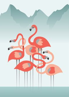Flamingo Illustration Behance Project