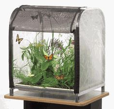 Now This Is A Cool Erfly Habitat For Our Clroom Cage Plants
