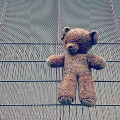 Urban Exploring in der Krieau – Exploring, Teddy Bear, Urban, Animals, Crates, Animales, Animaux, Teddy Bears, Animal