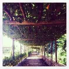 The gardens at Babilonstoren, South Africa Milk And Honey, South Africa, To Go, Gardens, African, Wine, Places, Garden, Garden Types