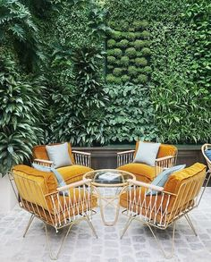 chic mustard outdoor chairs & a living wall! Garden Furniture, Outdoor Furniture Sets, Kincaid Furniture, Luxury Furniture, Furniture Decor, Recycled Furniture, Furniture Layout, Dining Furniture, Backyards