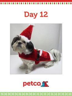 Here is the final 12 Days of Pinterest featured image (12/14/2012)! Pin Charlie in his Doggy Santa Suit  to one of your boards for a chance to win a 500 dollar Petco shopping spree, plus 500 dollar Petco Gift Card for a Petco Foundation Shelter/Rescue of your choice. Winner will be announced tomorrow (12/15/2012) between 12 pm and 5 pm Pacific time. Good luck to everyone!