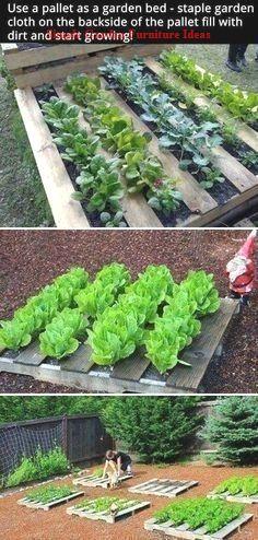 Diy pallet garden how to build a raised vegetable garden bed simple &am Vertical Vegetable Gardens, Vegetable Garden Design, Small Garden Design, Vegetable Bed, Vegetable Gardening, Vegetable Ideas, Diy Garden Furniture, Diy Garden Decor, Furniture Ideas