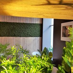 Mose vegg fra WALL-IT! Blinds, Restaurant, Windows, Curtains, Wall, Home Decor, Nature, Decoration Home, Room Decor