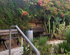Corner in Holon cactus park Cactus Park, Garden Bridge, Israel, Corner, Outdoor Structures, Plants, Plant, Planets