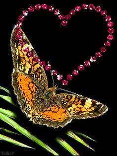 GIFS HERMOSOS: flores y mariposas encontradas en la web