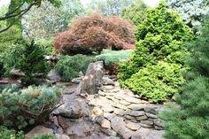 Image detail for -Dwarf Conifers Around Your Pond & in Your Garden | Bergen Water ...