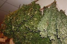Pirts - svētnīca ķermenim un garam Herbs, Life, Herb, Spice