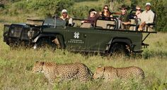 Safari at Londolozi Game Reserve in South Africa.  Yes that is how close you can get to the wildlife - awesome to be there with them in their own environment.  Being a private reserve allows you to be able to truly go off-road here.