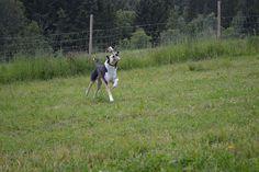 Gårdstunet Hundepensjonat: Lykkelige hunder og vann er dagens stikkord:-)