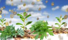 Din cele mai vechi timpuri, popoarele lumii au folosit plantele fie pentru a lecui diferite boli, fie pentru a alunga răul, urâtul, ghinionul și paguba din casă. Iată care sunt cele mai folosite plante. Leușteanul îndepărtează răul Una dintre plantele cu mare efect asupra energiilor negative este Law Of Attraction, Feng Shui, Diy And Crafts, Crown, Plant