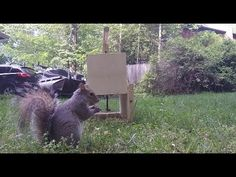 How to Make a Squirrel Trap - DIY catch alive trap - YouTube