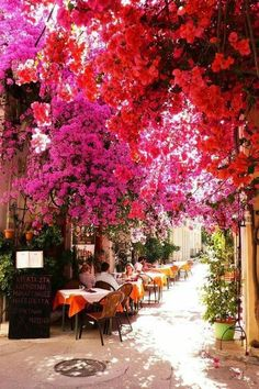 Greece, flowers, and pink Bild