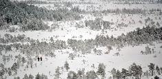 Torronsuon kansallispuisto - Luontoon.fi