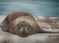 Animals, Mar Del Plata, Animales, Animaux, Animal, Animais