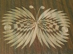 FSM Flying Spaghetti Monster Crop Circle resembles the FSM! Church of the Flying Spaghetti Monster