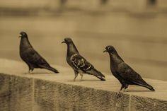 Olga Olay Photograph - Three Birds by Olga Olay  #OlgaOlayPhotography, #Three birds, #FineArtPrints, #HomeDecore