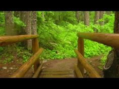 Take a Hike in a Dense Forest - 15 minutes workout video - YouTube