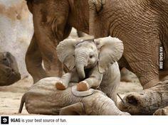 Baby elephant: Cuteness overload.