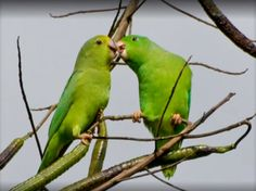 Can It Be? Parrots Name Their Children, And Those Names, Like Ours, Stick For Life