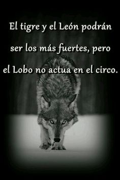 Frases shared by Der Steppenwolf, Best Quotes, Life Quotes, Wolf Quotes, Spanish Quotes, Teen Wolf, Rupaul, Just In Case, Positive Quotes