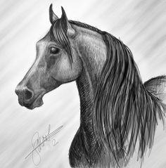 Digital Drawing of an Arabian Horse   #ArabianHorses #ArabianHorseAssociation  #ArabiansInTheArts