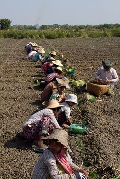 Myanmar Farm Workers