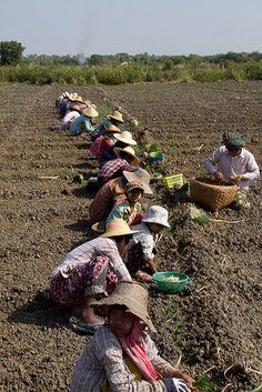Myanmar Farm Workers
