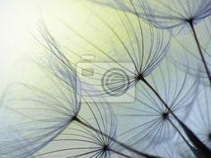 Wall Mural dandelion seed - abstract - bloom • PIXERSIZE.com