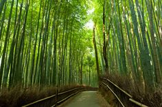 This bright green bamboo grove will transport you to a magical world. It's located in Kyoto, Japan.