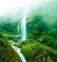 Milky white water cutting through the green mountain.