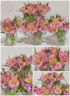 Flores da semana: astromélias #flower #flores #flowerpower #astromelias #pink #casadasamigas