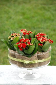 #flowercenterpiece #wedding #ecowedding #kalnchoe #caladiva #ecofriendlyfavors #favors, #plantfavors, #plants #gift, #growinggift #pot #pottedflower #pottery #plante #flori #aranjamentnunta #centerpiece #marturiinunta, #flori #marturiibotez, #ghivecemarturii #botez #ghiveci, #marturii