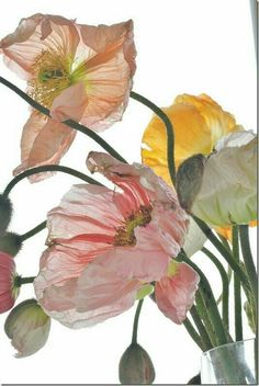 Pink Poppies Pink Poppies The post Pink Poppies appeared first on Diy Flowers. Deco Floral, Art Floral, Botanical Art, Botanical Illustration, Flowers Nature, Beautiful Flowers, Diy Flowers, Poppy Photography, Photography Flowers