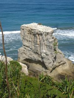Photo of Muriwai Gannet Colony