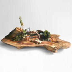 恐竜 Dinosaur /// 彼らはどんな夢を見ていたのだろうか What kind of dream were they dreaming about? /// 植物の寄せ植えの方法・やり方【 #succulents #plants #plantstyling #greenplants #terrarium #多肉植物 #寄せ植え #観葉植物 #ガーデニング 】