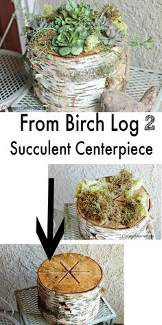 Use a birch fire log to create a succulent centerpiece