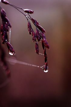 Fine Art Nature Photograph of a Rain Drop by InLightImagery